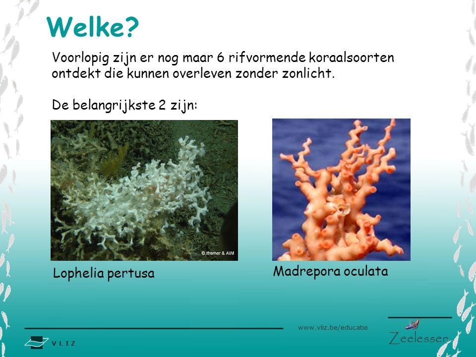 V L I Z www.vliz.be/educatie Zeelessen Welke? Voorlopig zijn er nog maar 6 rifvormende koraalsoorten ontdekt die kunnen overleven zonder zonlicht. De