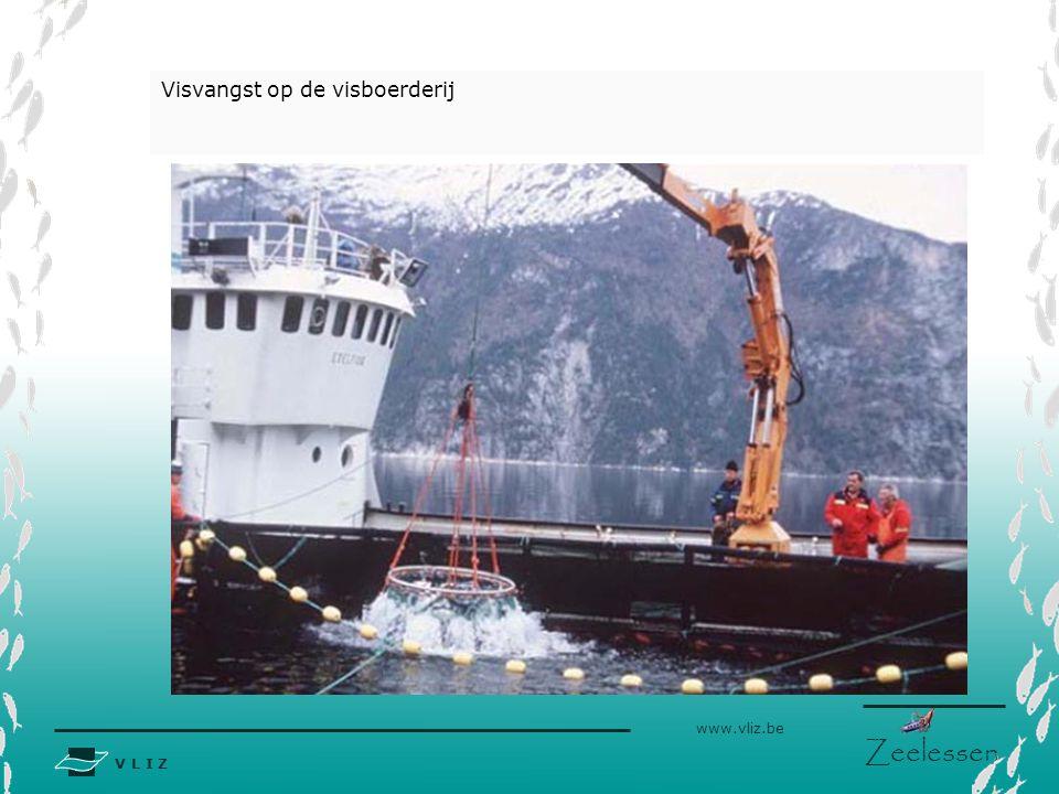 V L I Z www.vliz.be Zeelessen Visvangst op de visboerderij