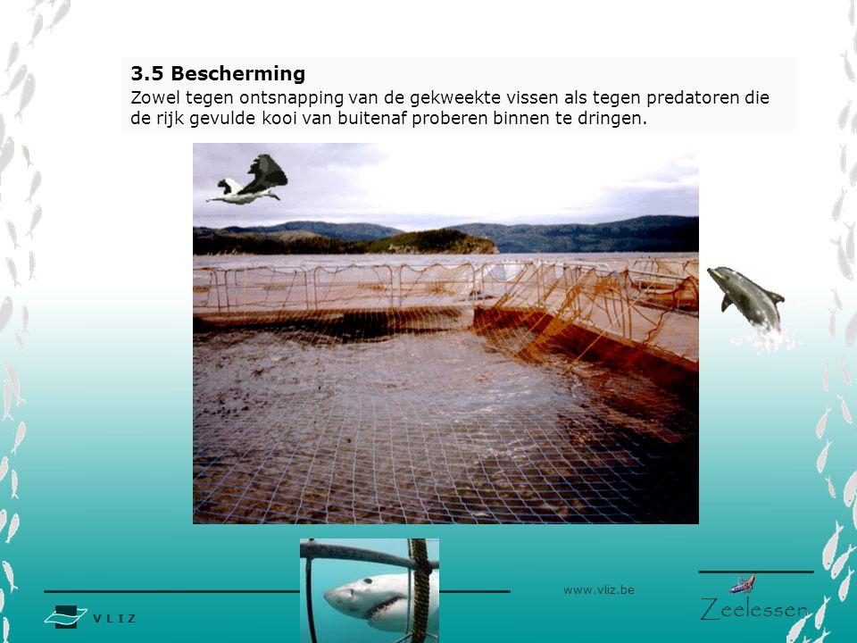 V L I Z www.vliz.be Zeelessen 3.5 Bescherming Zowel tegen ontsnapping van de gekweekte vissen als tegen predatoren die de rijk gevulde kooi van buitenaf proberen binnen te dringen.