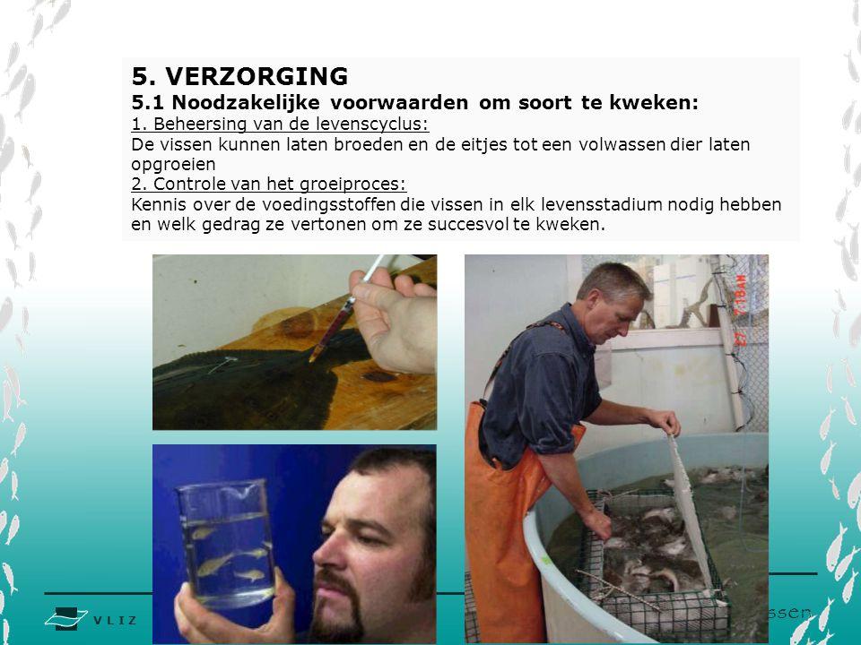 V L I Z www.vliz.be Zeelessen 5.VERZORGING 5.1 Noodzakelijke voorwaarden om soort te kweken: 1.