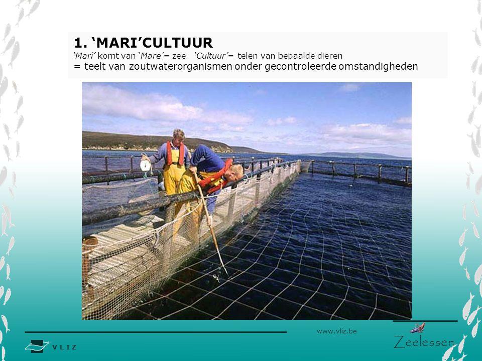 V L I Z www.vliz.be Zeelessen 1.'MARI'CULTUUR 'Mari' komt van 'Mare'= zee 'Cultuur'= telen van bepaalde dieren = teelt van zoutwaterorganismen onder gecontroleerde omstandigheden