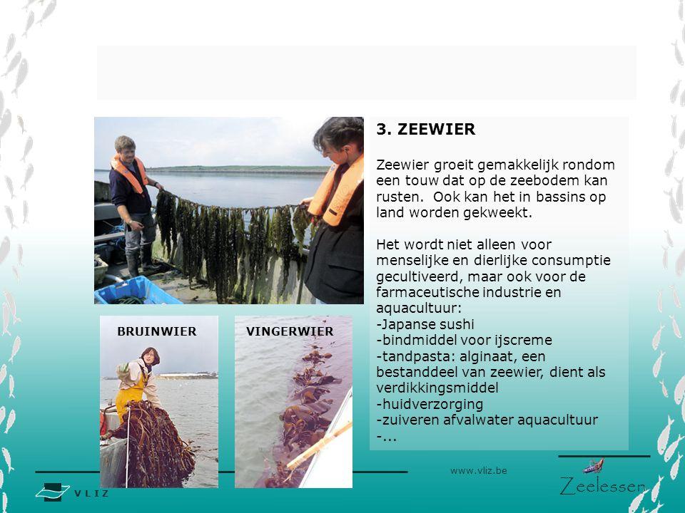 V L I Z www.vliz.be Zeelessen 3.