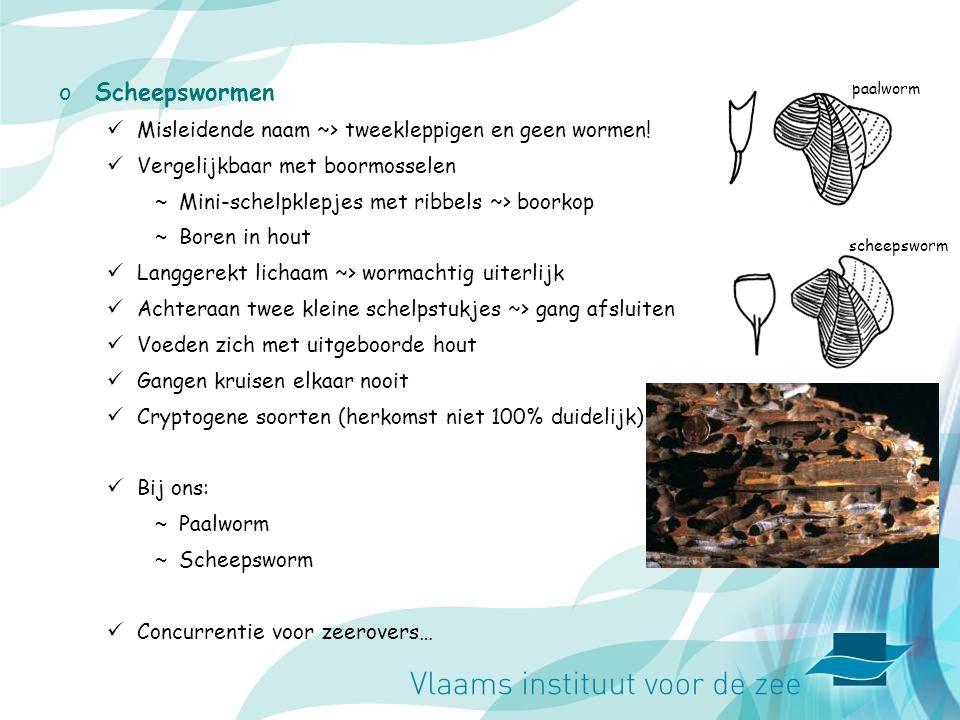oScheepswormen Misleidende naam ~> tweekleppigen en geen wormen.