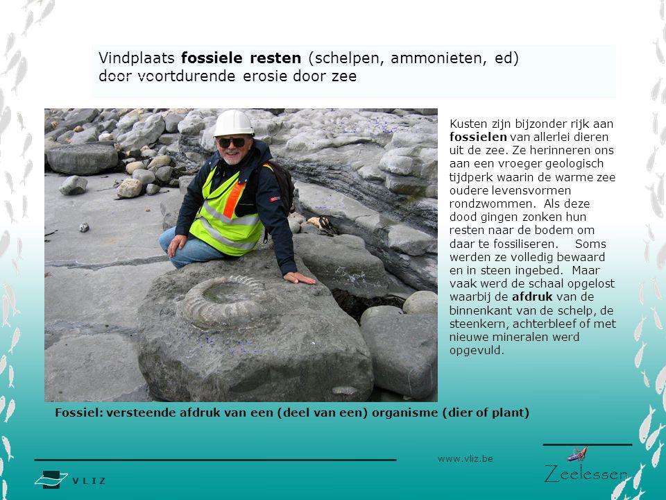 V L I Z www.vliz.be Zeelessen Vindplaats fossiele resten (schelpen, ammonieten, ed) door voortdurende erosie door zee Kusten zijn bijzonder rijk aan fossielen van allerlei dieren uit de zee.