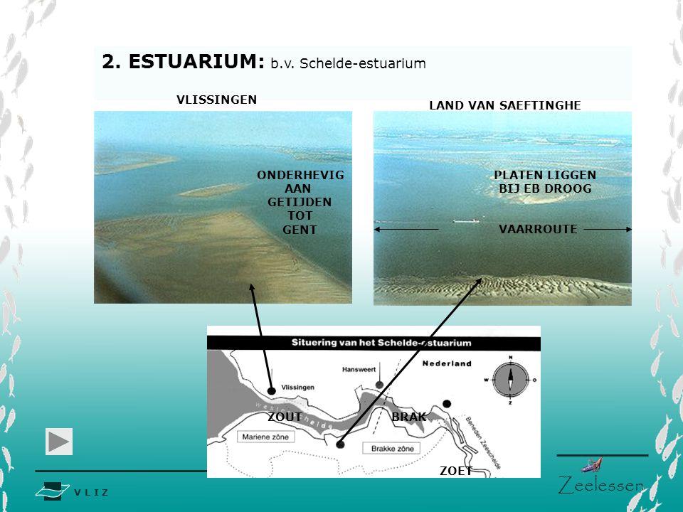 V L I Z www.vliz.be Zeelessen Slikken en schorren SCHOR SLIK SLIBRIJKE OEVERS SCHOR/KWELDER Begroeid land gelegen boven de getijdenzone binnen het supralittoraal.