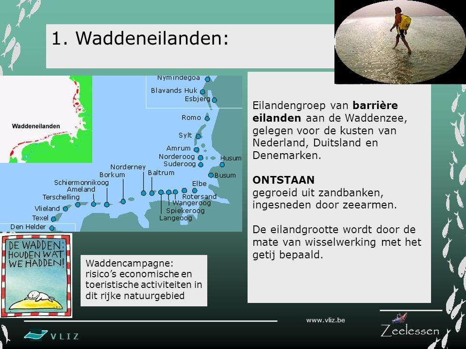 V L I Z www.vliz.be Zeelessen Eilandengroep van barrière eilanden aan de Waddenzee, gelegen voor de kusten van Nederland, Duitsland en Denemarken.