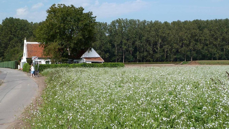 Waar vroeger het kasteel van Merendree stond, de zogenaamde Gerolf - of Meierswal, staat sinds ca.