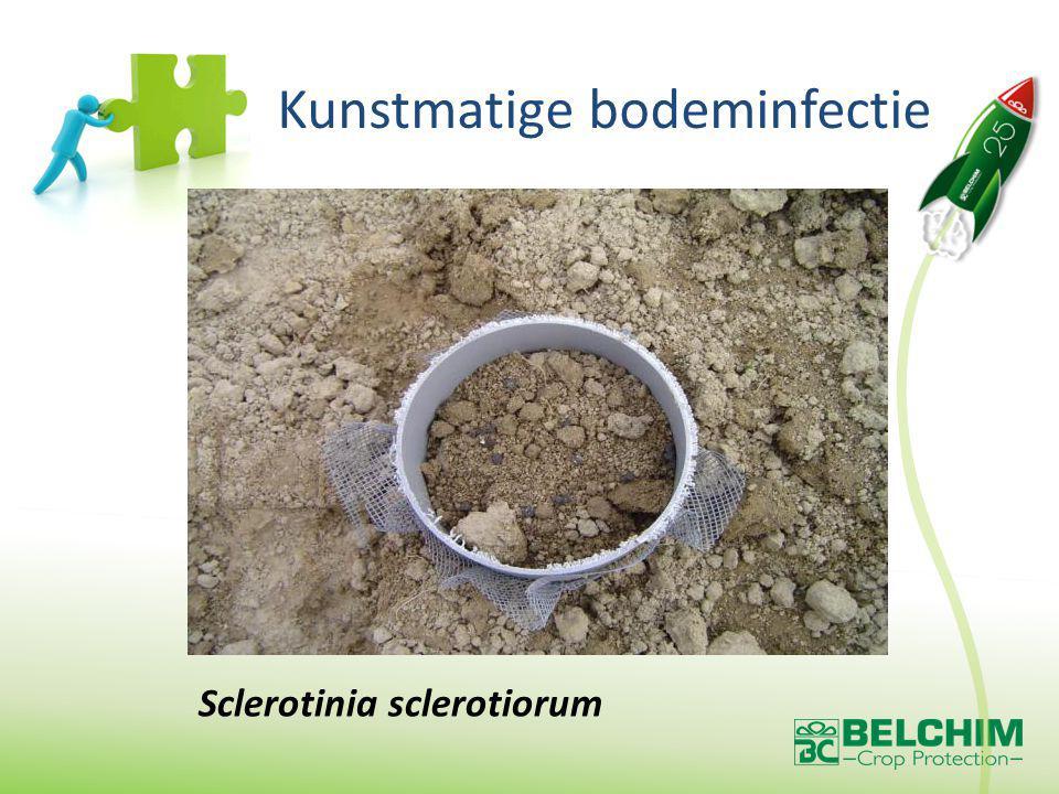 Sclerotinia sclerotiorum Kunstmatige bodeminfectie