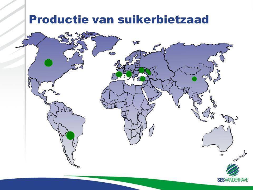 Productie van suikerbietzaad