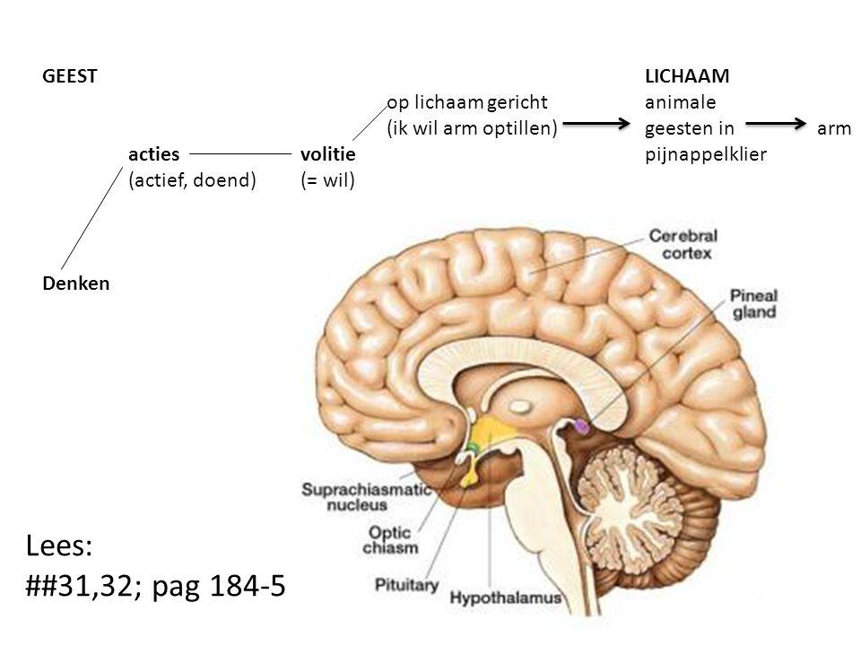 GEESTLICHAAM op lichaam gerichtanimale (ik wil arm optillen)geesten inarm actiesvolitie pijnappelklier (actief, doend)(= wil) Denken Lees: ##31,32; pag 184-5