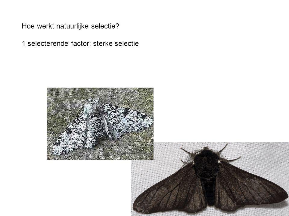 Hoe werkt natuurlijke selectie? 1 selecterende factor: sterke selectie