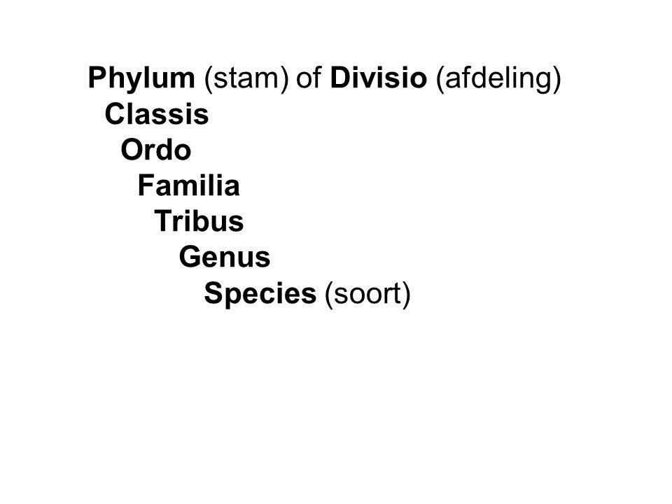 Phylum (stam) of Divisio (afdeling) Classis Ordo Familia Tribus Genus Species (soort)