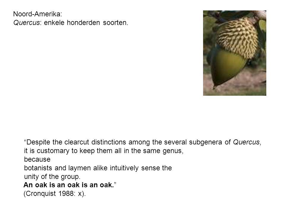 Phylum Classis Ordo Familia Tribus Genus Species (soort) Subspecies Varietas macro- evolutie micro- evolutie
