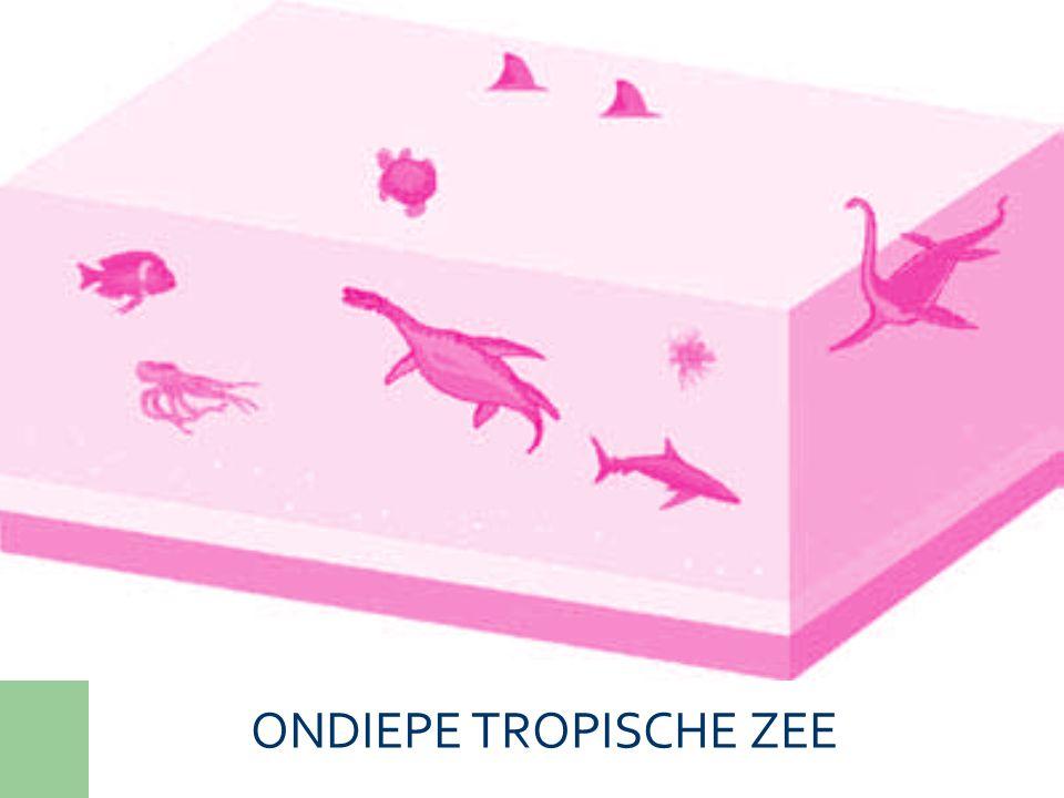 ONDIEPE TROPISCHE ZEE