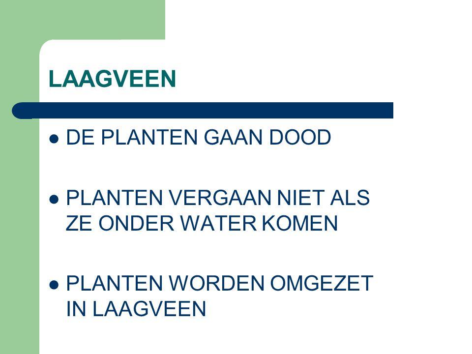 DE PLANTEN GAAN DOOD PLANTEN VERGAAN NIET ALS ZE ONDER WATER KOMEN PLANTEN WORDEN OMGEZET IN LAAGVEEN