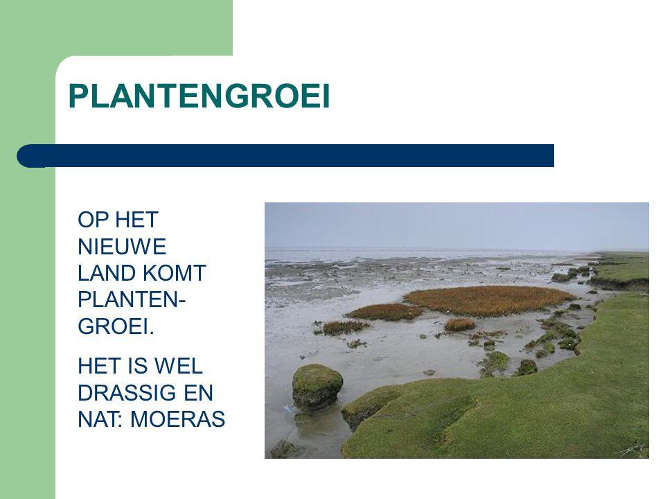 PLANTENGROEI OP HET NIEUWE LAND KOMT PLANTEN- GROEI. HET IS WEL DRASSIG EN NAT: MOERAS
