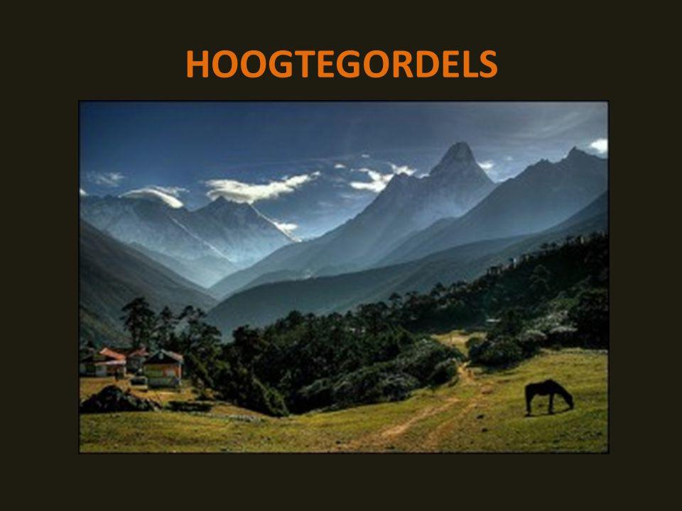 HOOGTEGORDELS