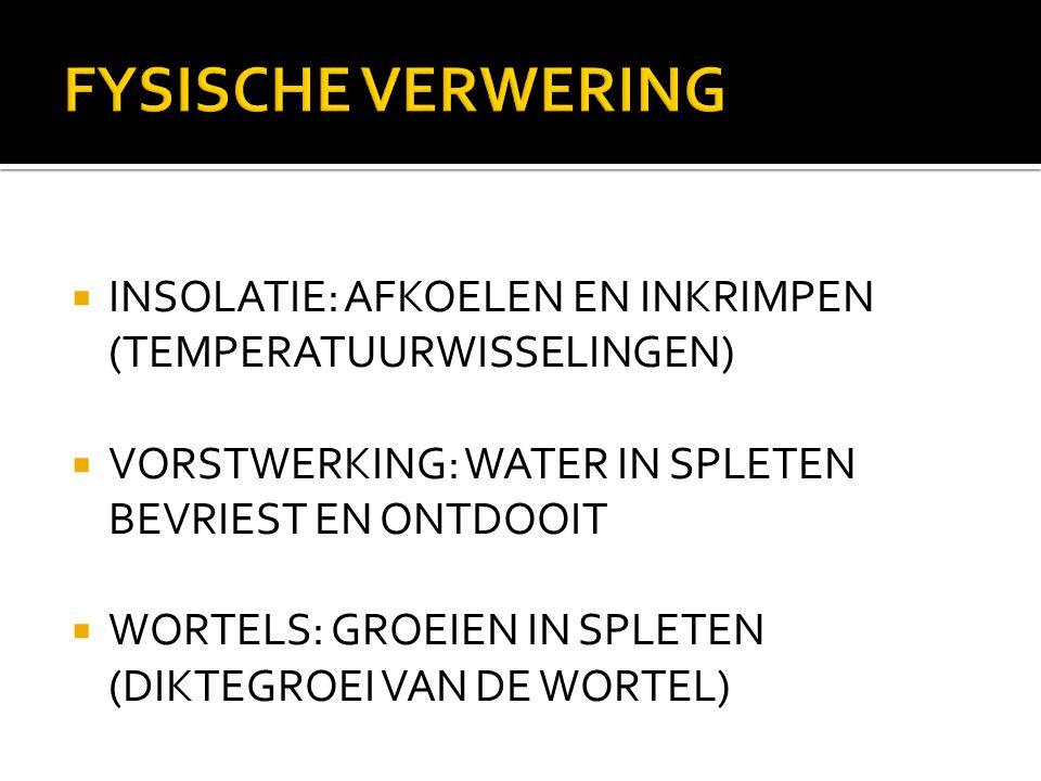 FYSISCHE VERWERING  INSOLATIE: AFKOELEN EN INKRIMPEN (TEMPERATUURWISSELINGEN)  VORSTWERKING: WATER IN SPLETEN BEVRIEST EN ONTDOOIT  WORTELS: GROEIE