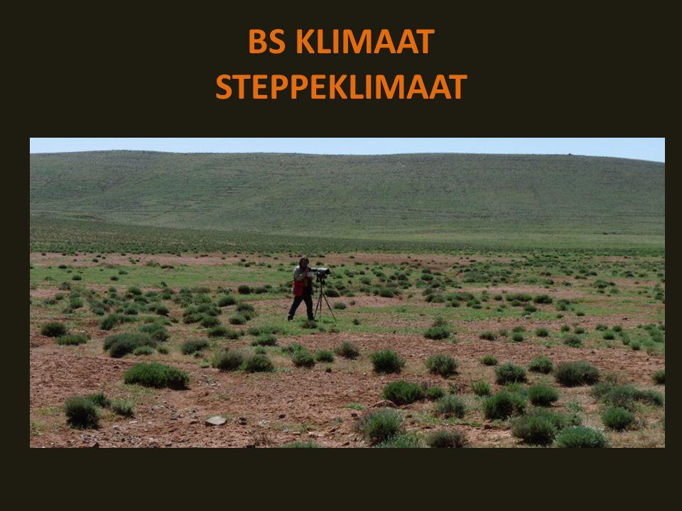 BS KLIMAAT STEPPEKLIMAAT