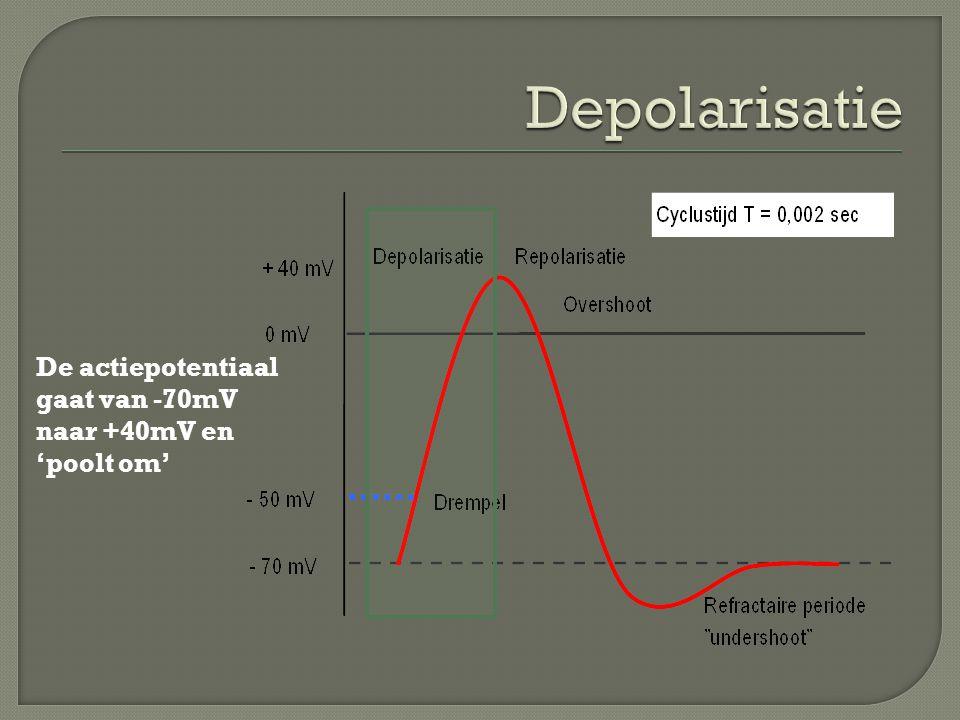De actiepotentiaal gaat van -70mV naar +40mV en 'poolt om'