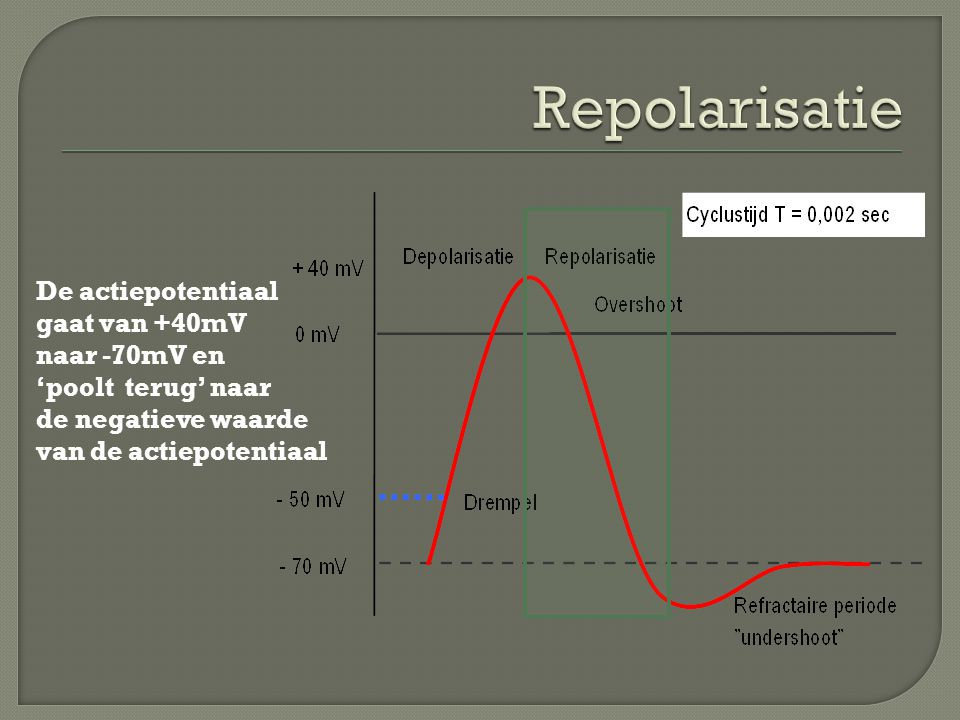 De actiepotentiaal gaat van +40mV naar -70mV en 'poolt terug' naar de negatieve waarde van de actiepotentiaal