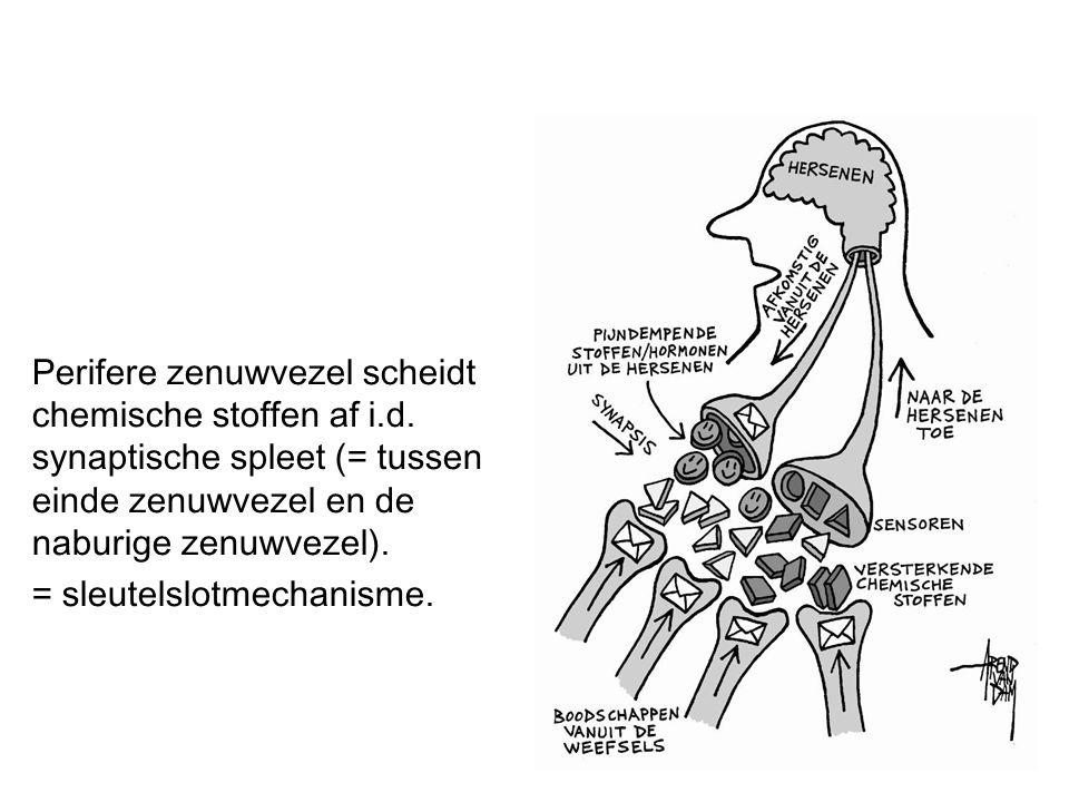 Perifere zenuwvezel scheidt chemische stoffen af i.d. synaptische spleet (= tussen einde zenuwvezel en de naburige zenuwvezel). = sleutelslotmechanism