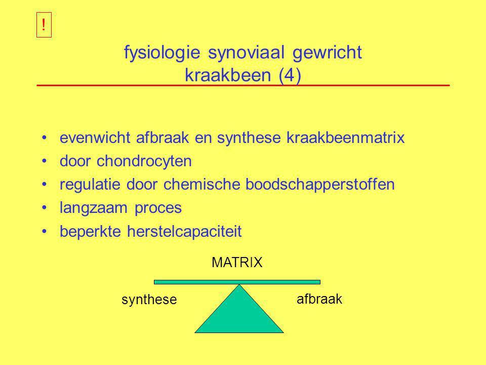 fysiologie synoviaal gewricht kraakbeen (4) evenwicht afbraak en synthese kraakbeenmatrix door chondrocyten regulatie door chemische boodschapperstoff