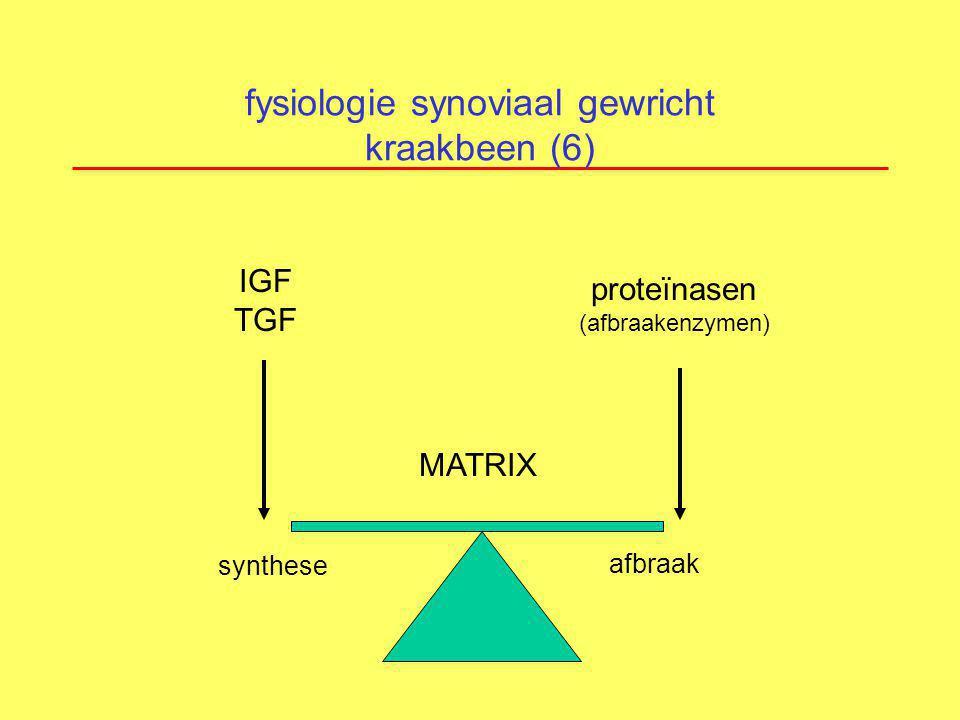 fysiologie synoviaal gewricht kraakbeen (6) synthese MATRIX afbraak IGF TGF proteïnasen (afbraakenzymen)