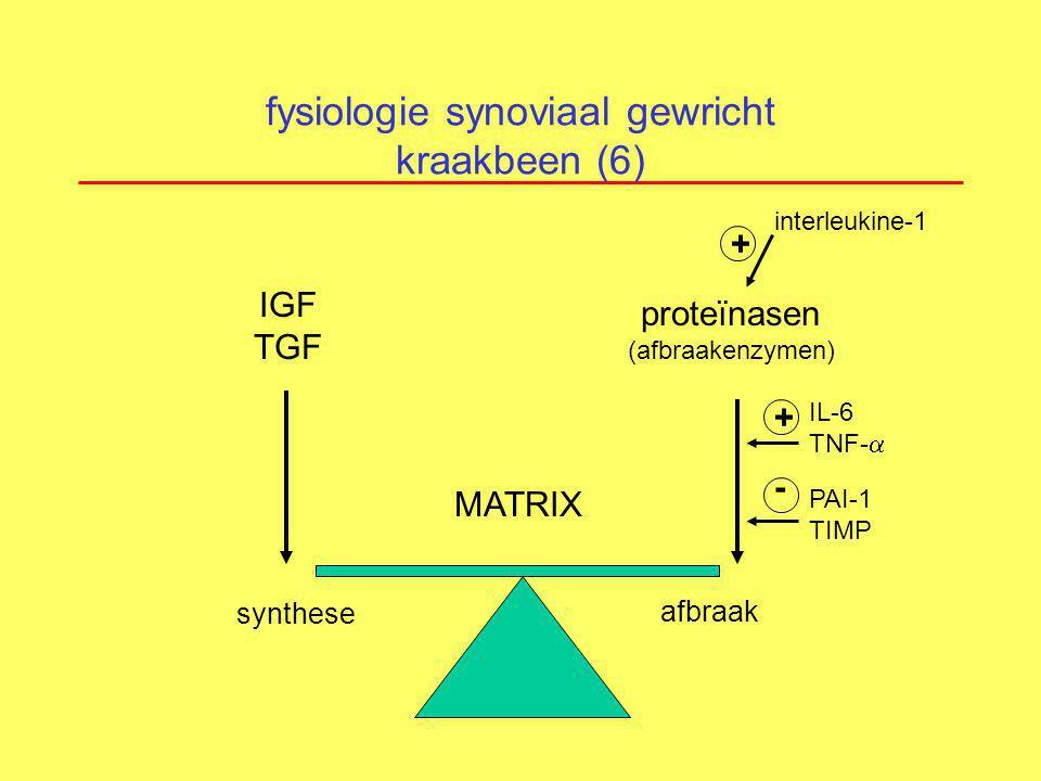 fysiologie synoviaal gewricht kraakbeen (6) synthese MATRIX afbraak IGF TGF proteïnasen (afbraakenzymen) interleukine-1 + IL-6 TNF-  + PAI-1 TIMP -