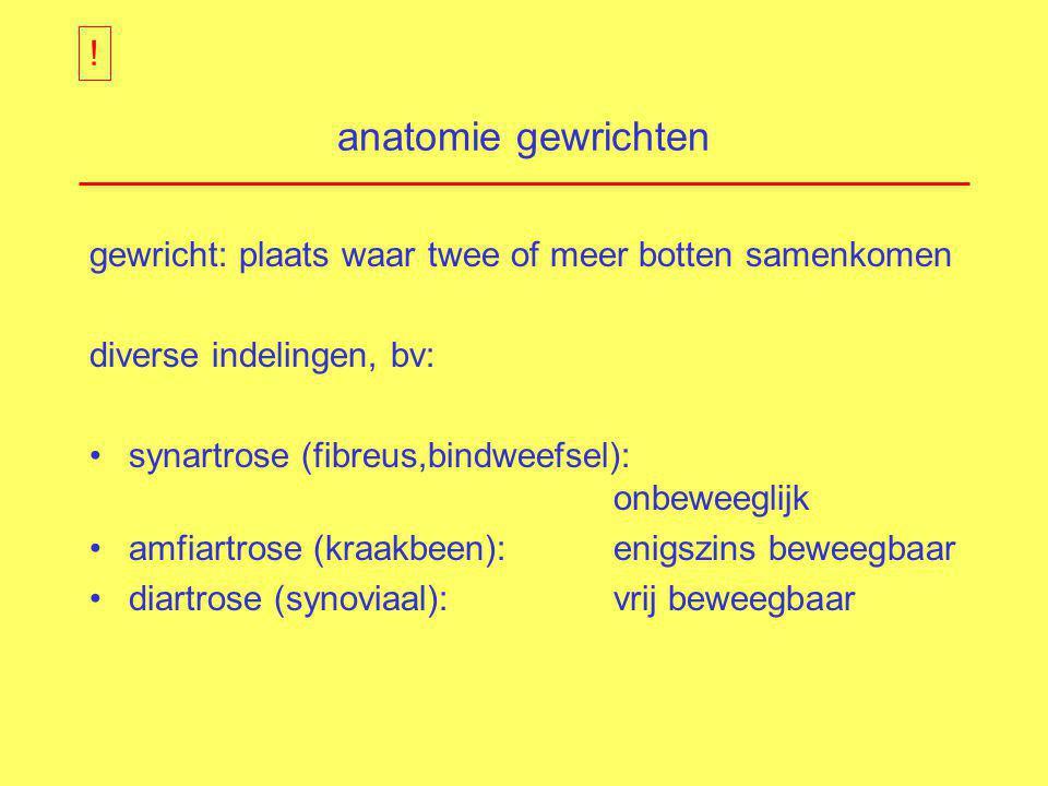 anatomie gewrichten gewricht: plaats waar twee of meer botten samenkomen diverse indelingen, bv: synartrose (fibreus,bindweefsel): onbeweeglijk amfiar