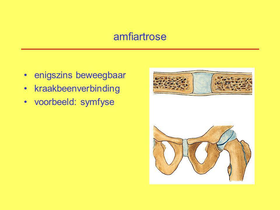 diartrose vrij beweeglijk synoviale gewrichten voorbeelden: –heup –knie –schouder –pols –vingers !