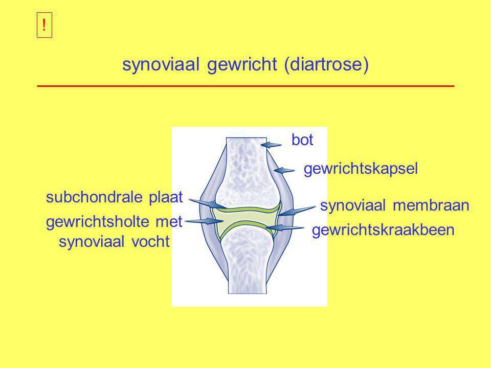 synoviaal gewricht (diartrose) bot gewrichtskapsel synoviaal membraan gewrichtskraakbeen subchondrale plaat gewrichtsholte met synoviaal vocht !