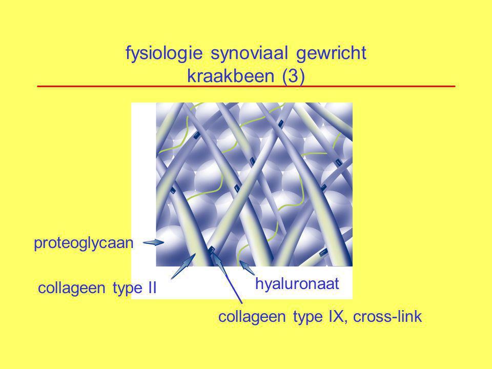fysiologie synoviaal gewricht kraakbeen (4) evenwicht afbraak en synthese kraakbeenmatrix door chondrocyten regulatie door chemische boodschapperstoffen langzaam proces beperkte herstelcapaciteit synthese MATRIX afbraak !