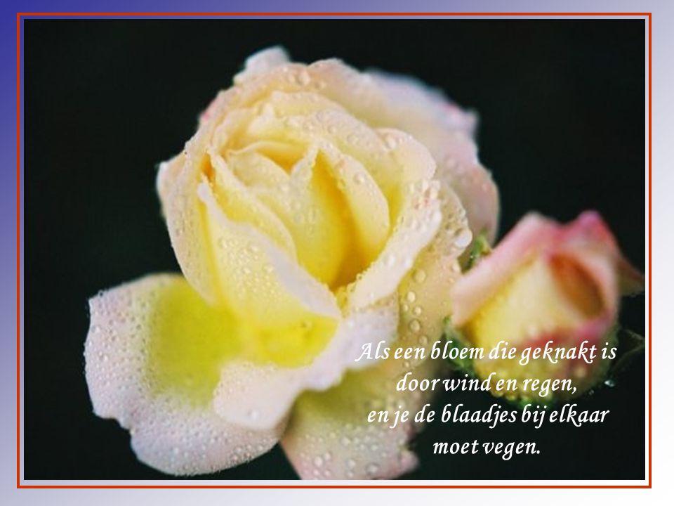 Zo mooi als een bloem kan het leven zijn. Maar het leven kan ook zijn, met heel veel pijn.