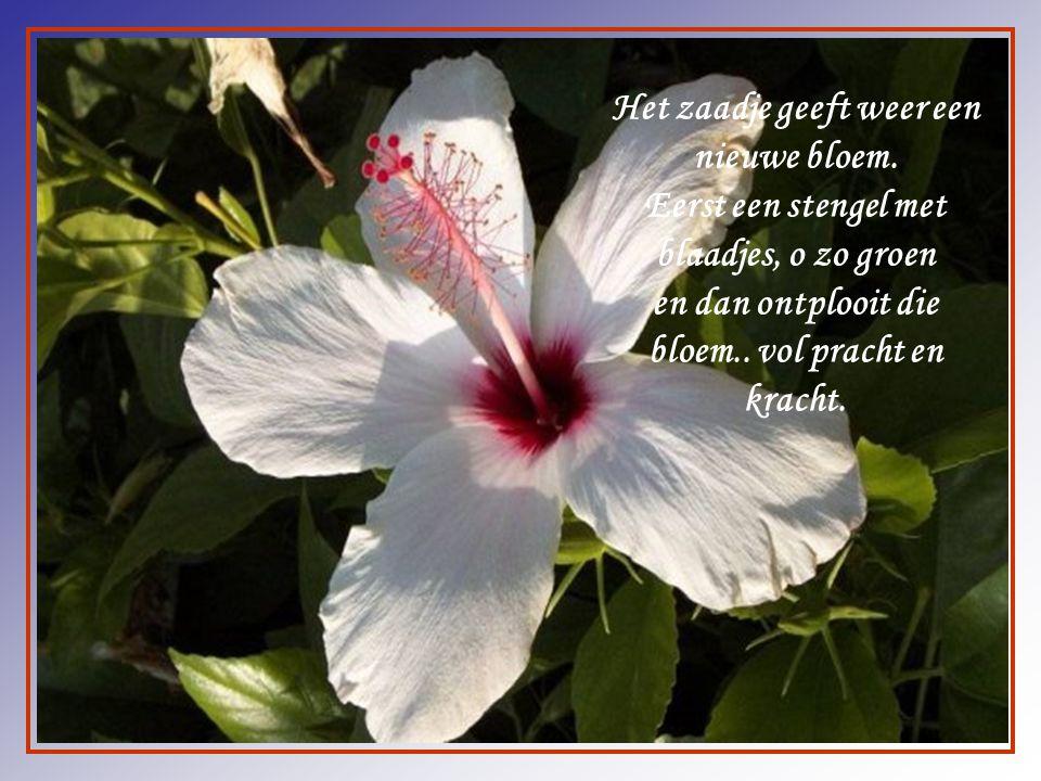 Als een bloem die geknakt is door wind en regen, en je de blaadjes bij elkaar moet vegen.