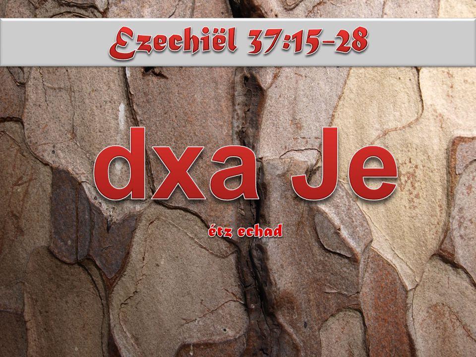 Dan geschiedt het woord van de Ene aan mij en zegt: en jij, mensenzoon, neem je één boomtak en schrijf daarop van Juda en van de zonen Israëls, zijn bondgenoot ; neem weer één boomtak en schrijf daarop van Jozef, de boomtak van Efraïm, en van heel het huis Israël, zijn bondgenoot ; houd ze bij elkaar, één bij één wat jou betreft, tot één boom; in jouw hand zullen ze worden tot één;zodra ze tot je zeggen,de zonen van je gemeente,- als ze zeggen:meld je ons niet wat dit alles bij jou wil?,spreek dan tot hen:zó heeft gezegd mijn Heer, de Ene:zie, ik ga de boomtak van Jozef nemen,die nu in de hand van Efraïm is,en de stammen van Israël, zijn bondgenoot,-en ik zal de boomtak van Juda plaats geven tegen hem aan en hen maken tot één boom, in mijn hand zullen ze één worden;de boomtakken waarop jij schrijft zullen voor hun ogen in jouw hand zijn;spreek dan tot hen: