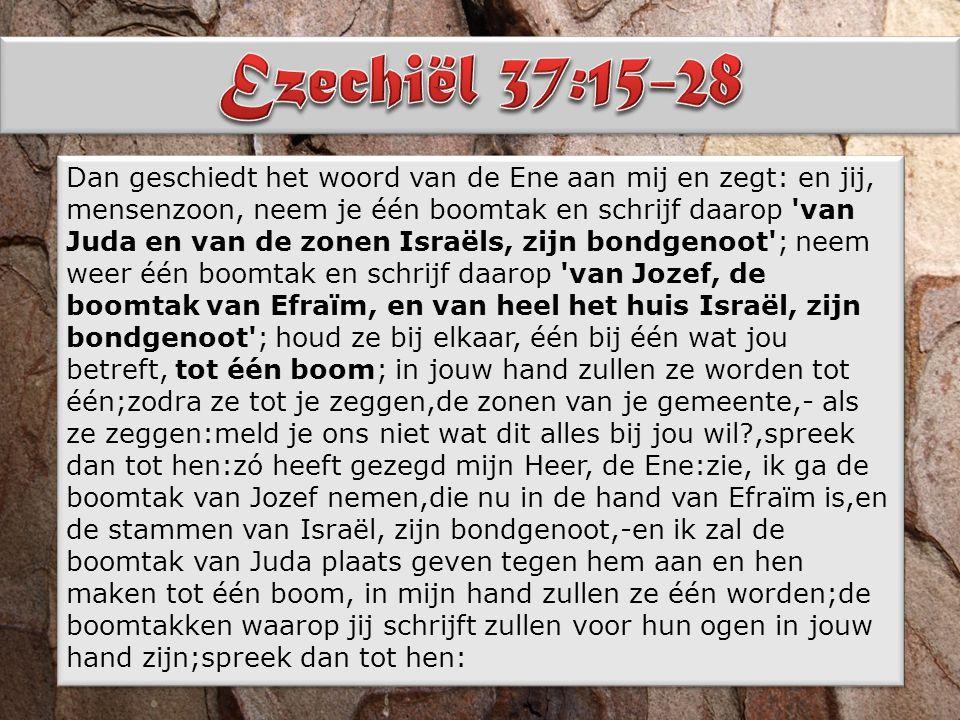 Dan geschiedt het woord van de Ene aan mij en zegt: en jij, mensenzoon, neem je één boomtak en schrijf daarop van Juda en van de zonen Israëls, zijn bondgenoot ; neem weer één boomtak en schrijf daarop van Jozef, de boomtak van Efraïm, en van heel het huis Israël, zijn bondgenoot ; houd ze bij elkaar, één bij één wat jou betreft, tot één boom; in jouw hand zullen ze worden tot één;zodra ze tot je zeggen,de zonen van je gemeente,- als ze zeggen:meld je ons niet wat dit alles bij jou wil ,spreek dan tot hen:zó heeft gezegd mijn Heer, de Ene:zie, ik ga de boomtak van Jozef nemen,die nu in de hand van Efraïm is,en de stammen van Israël, zijn bondgenoot,-en ik zal de boomtak van Juda plaats geven tegen hem aan en hen maken tot één boom, in mijn hand zullen ze één worden;de boomtakken waarop jij schrijft zullen voor hun ogen in jouw hand zijn;spreek dan tot hen: