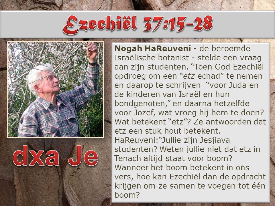 """Nogah HaReuveni - de beroemde Israëlische botanist - stelde een vraag aan zijn studenten. """"Toen God Ezechiël opdroeg om een """"etz echad"""" te nemen en da"""