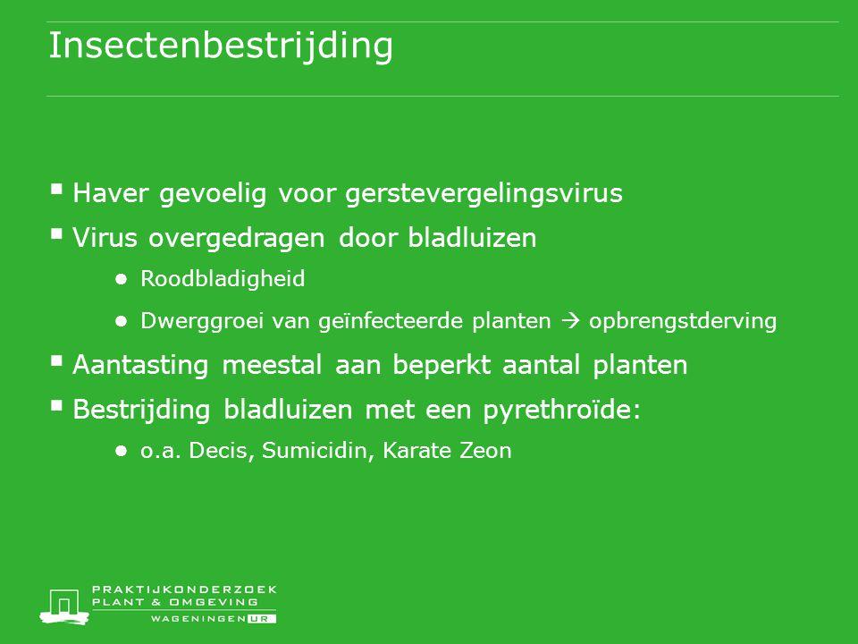 Insectenbestrijding  Haver gevoelig voor gerstevergelingsvirus  Virus overgedragen door bladluizen ● Roodbladigheid ● Dwerggroei van geïnfecteerde p