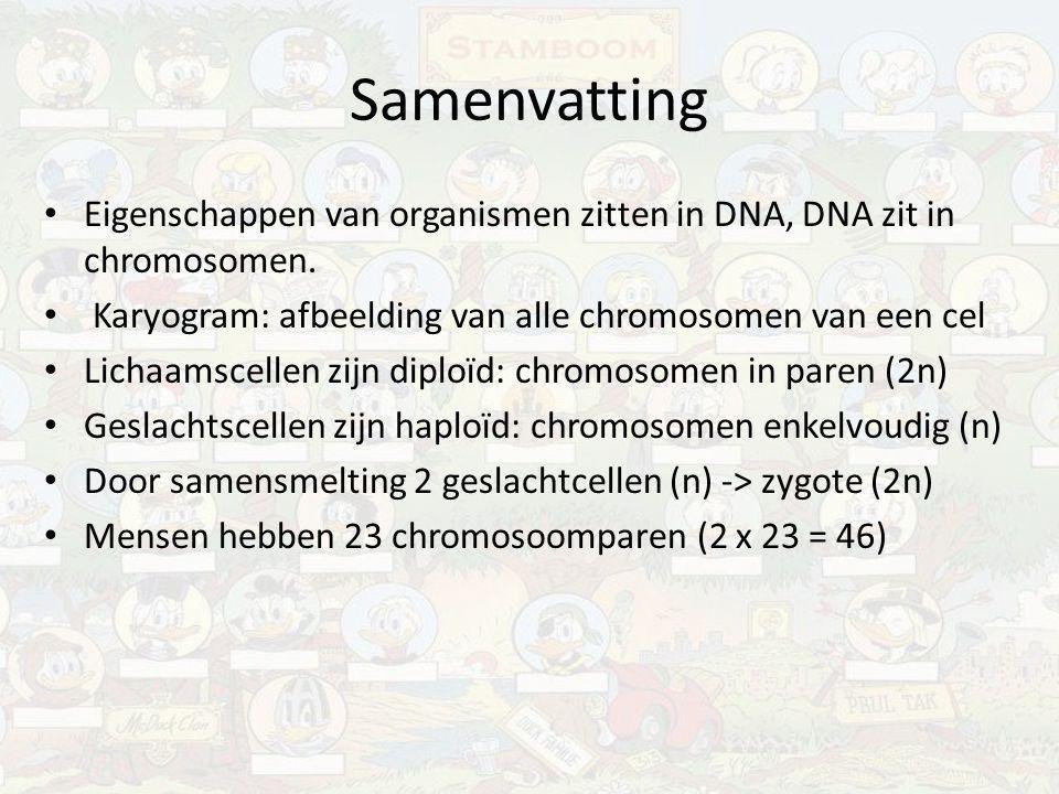 Samenvatting Eigenschappen van organismen zitten in DNA, DNA zit in chromosomen. Karyogram: afbeelding van alle chromosomen van een cel Lichaamscellen