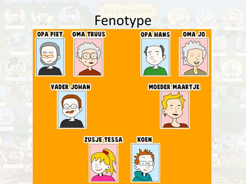 Fenotype