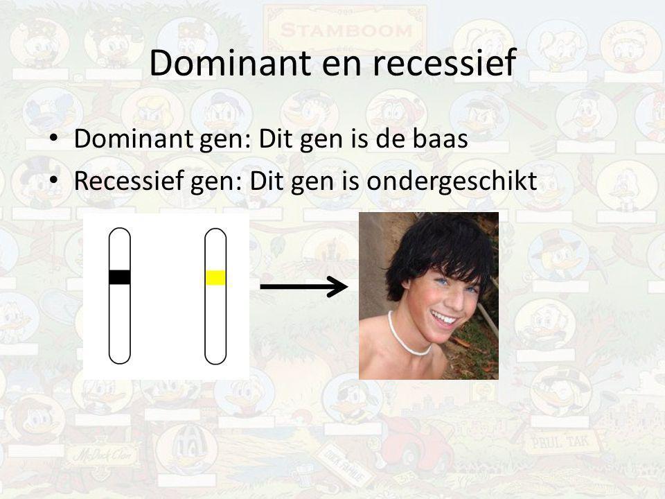 Dominant en recessief Dominant gen: Dit gen is de baas Recessief gen: Dit gen is ondergeschikt