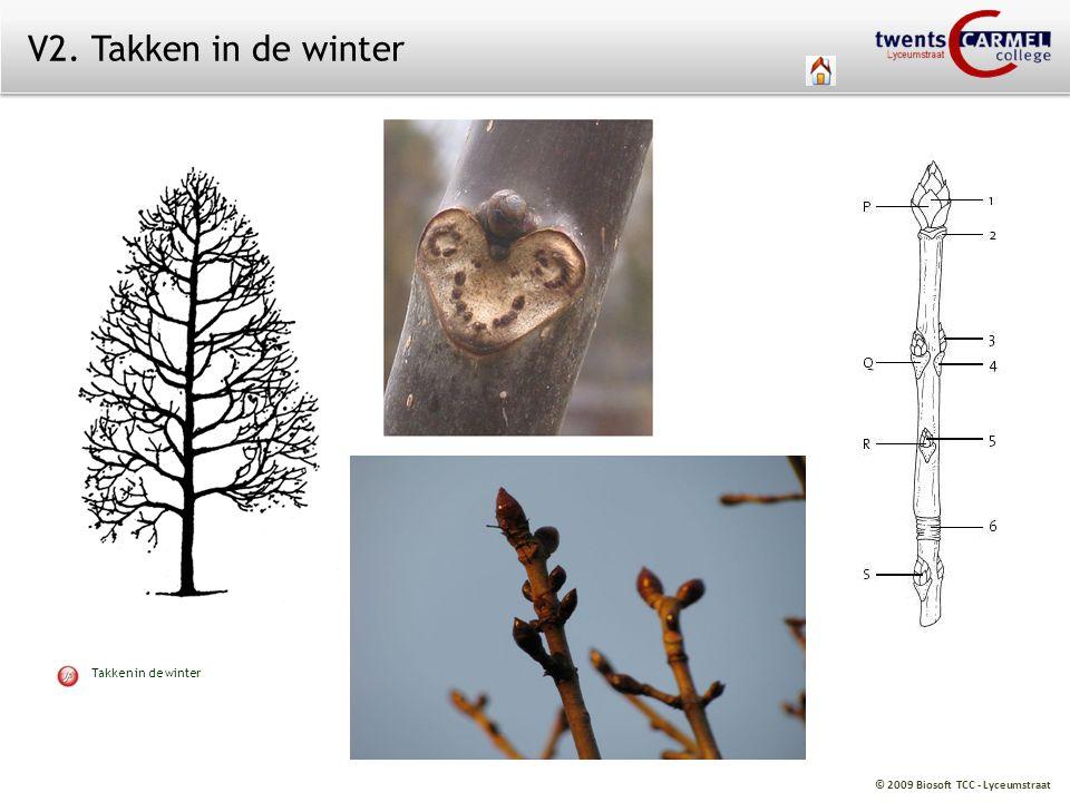 © 2009 Biosoft TCC - Lyceumstraat V2. Takken in de winter Takken in de winter