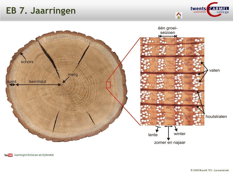 © 2009 Biosoft TCC - Lyceumstraat EB 7. Jaarringen Jaarringen De boom als tijdmeter