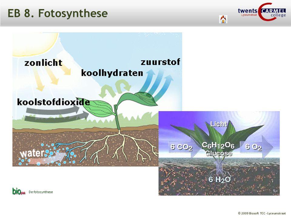 © 2009 Biosoft TCC - Lyceumstraat V1. De kracht van kiemende zaden