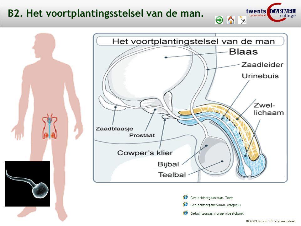 © 2009 Biosoft TCC - Lyceumstraat B2.Het voortplantingsstelsel van de man.
