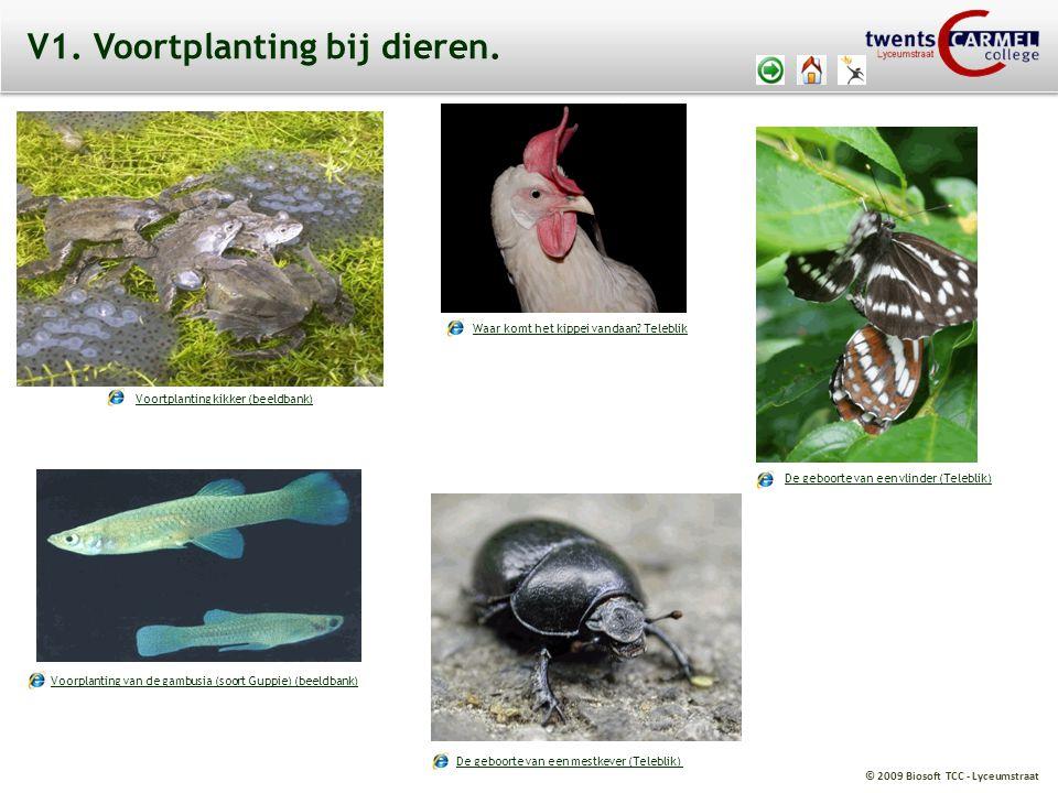 © 2009 Biosoft TCC - Lyceumstraat V1. Voortplanting bij dieren. Voortplanting kikker (beeldbank) Voorplanting van de gambusia (soort Guppie) (beeldban