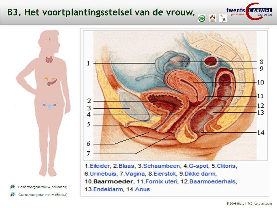 © 2009 Biosoft TCC - Lyceumstraat B3. Het voortplantingsstelsel van de vrouw. Geslachtsorganen vrouw. (Bioplek) Gelachtsorgaan vrouw (beeldbank)