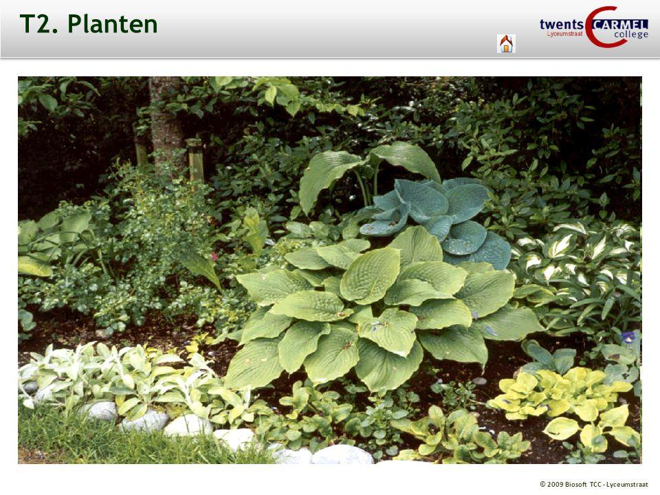 © 2009 Biosoft TCC - Lyceumstraat T2. Planten