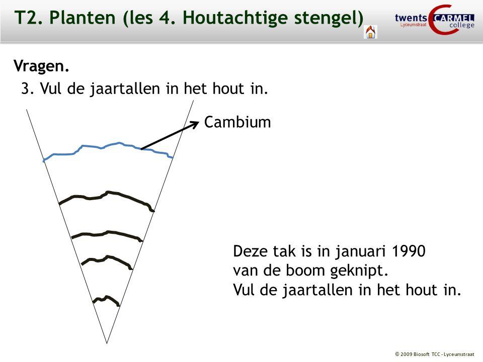 © 2009 Biosoft TCC - Lyceumstraat T2. Planten (les 4. Houtachtige stengel) Vragen. 3. Vul de jaartallen in het hout in. Deze tak is in januari 1990 va